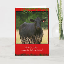 Cow Valentine Holiday Card