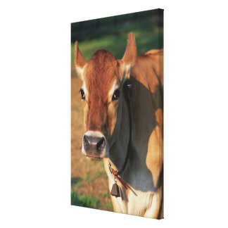 Cow Wearing a Cowbell Canvas Print