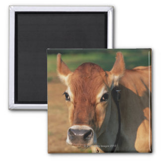 Cow Wearing a Cowbell Magnet