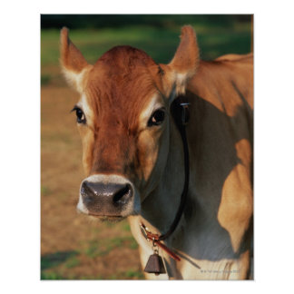 Cow Wearing a Cowbell Poster