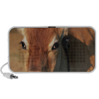 Cow Wearing a Cowbell PC Speakers