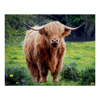 Cow with big horns beautiful nature scenery poster