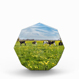 Cow with newborn calves in meadow with dandelions award
