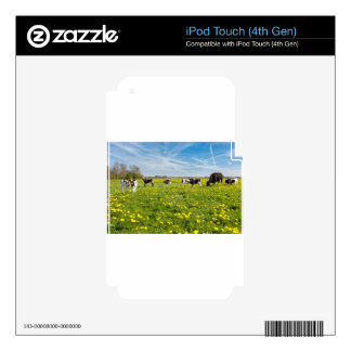 Cow with newborn calves in meadow with dandelions iPod touch 4G skin