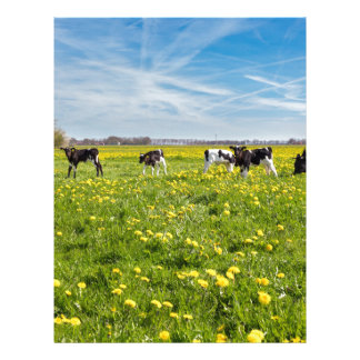 Cow with newborn calves in meadow with dandelions letterhead