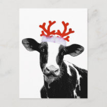 Cow with Reindeer Antlers Holiday Postcard