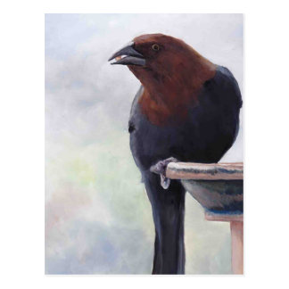 Cowbird Bird Art Postcard