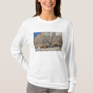 Cowboy and Cowgirl on Horses watching Herd T-Shirt