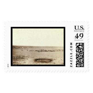 Cowboy Cattle Round Up SD 1891 Stamp