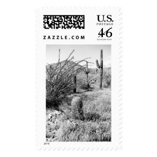 Cowboy Garden Postage Stamp (AZ Desert Photo)