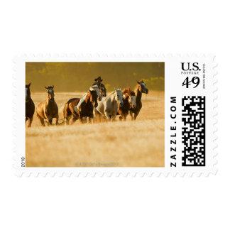 Cowboy herding horses 2 stamps