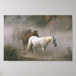 Cowboy Herding Poster