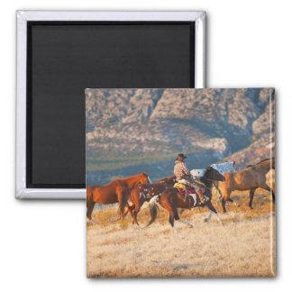 Cowboy herding wild horses 2 2 inch square magnet