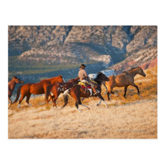 Cowboy herding wild horses 2 postcard