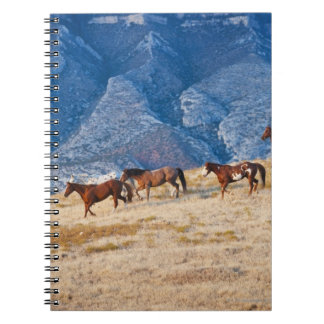Cowboy herding wild horses spiral notebook