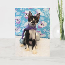 Cowboy, Kitten, Cat, Christmas, Rescue Holiday Card