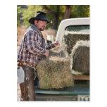 Cowboy lifting bales of hay postcard