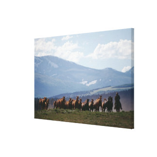 Cowboy moving herd of horses canvas print
