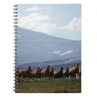 Cowboy moving herd of horses spiral note books