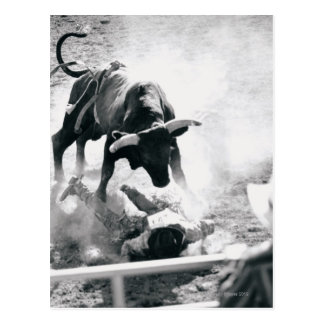 Cowboy on ground after falling off bull post card