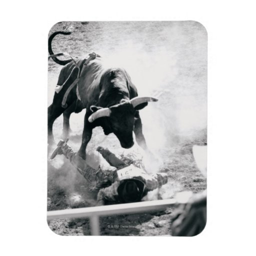 Cowboy on ground after falling off bull rectangular photo magnet