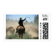 Cowboy on horse with lasso driving cattle postage