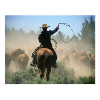 Cowboy on horse with lasso driving cattle postcard