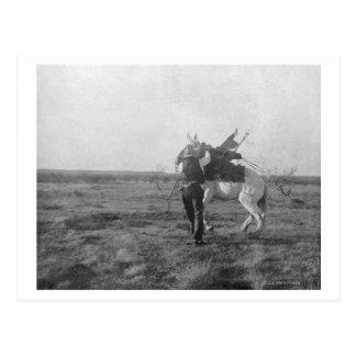 "Cowboy ""Red Saunders"" Saddles a Bronco Postcard"