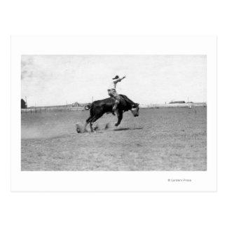Cowboy Riding a Bucking Bull Postcard