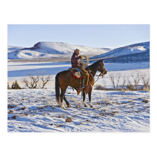 Cowboy riding a horse on the range on The Post Cards