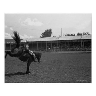 Cowboy riding horse in rodeo, (B&W) Poster