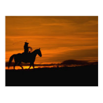 Cowboy riding in the Sunset with lariat Rope Postcard