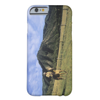 Cowboy riding through field barely there iPhone 6 case