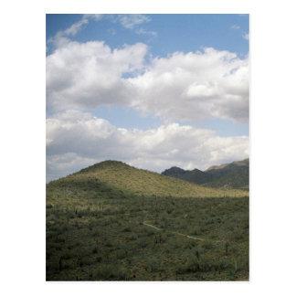 Cowboy Skyline Arizona Desert Photo Postcards