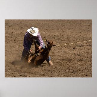 Cowboy ties a calf print