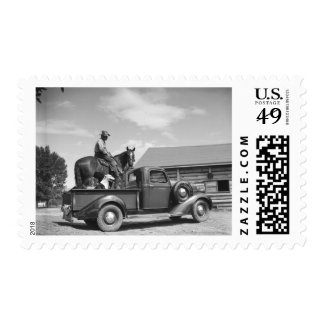 Cowboy with horse in a truck postage stamps