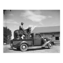 Cowboy with horse in a truck postcard