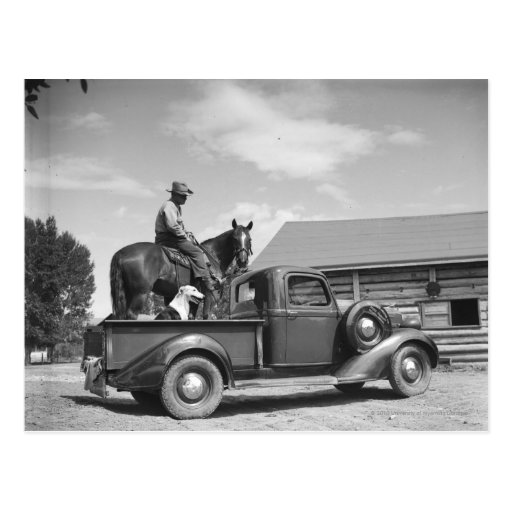 Cowboy with horse in a truck postcards