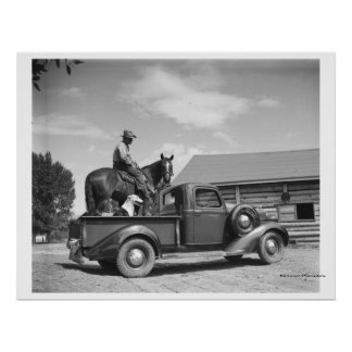 Cowboy with horse in a truck poster