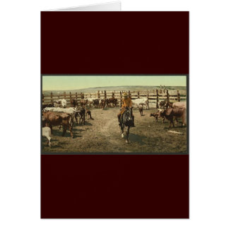 Cowboys and Cows Card