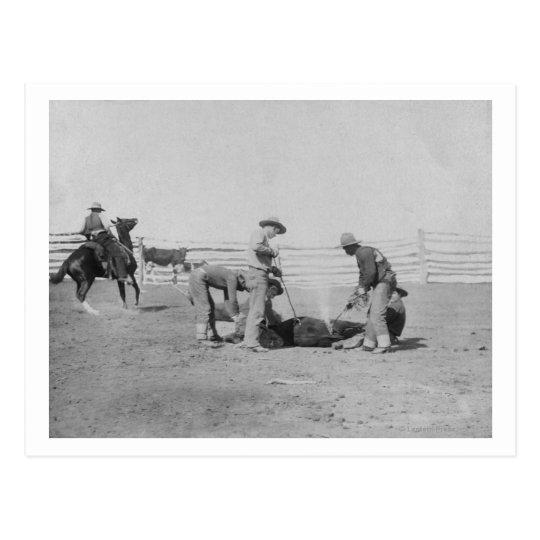 Cowboys Branding a Calf PhotographSouth Dakota Postcard