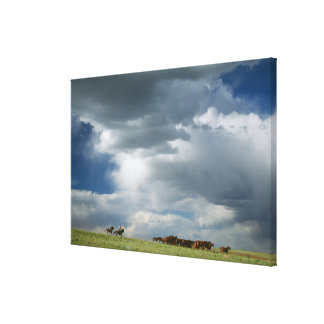 Cowboys moving herd of horses canvas print