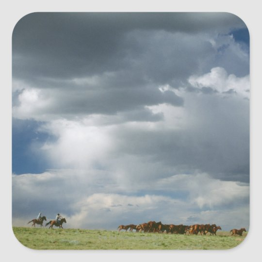 Cowboys moving herd of horses square sticker