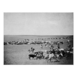Cowboys with Cattle on the Range Photograph Poster