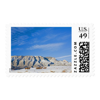 Cowboys with Heard of Horses Postage Stamp