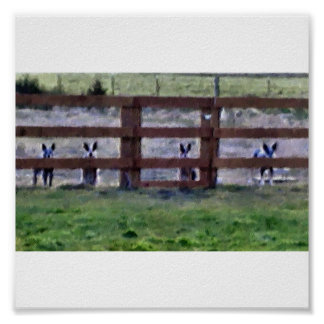 cowdogs at the fence line poster