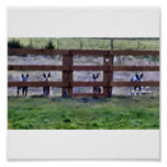 cowdogs at the fence line posters
