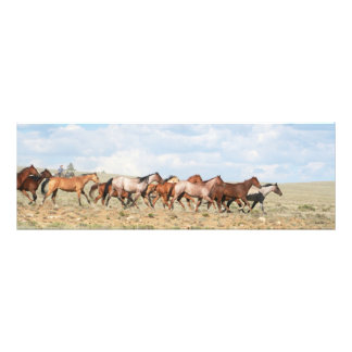Cowgirl Gathering Horses Photo Print