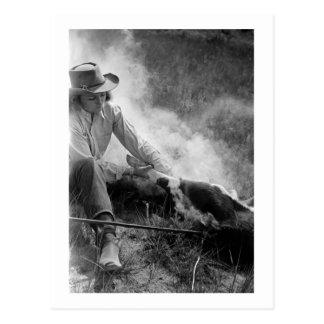 Cowgirl Rassling a Calf, 1930s Postcard