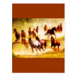 Cowgirls Rule Postcards